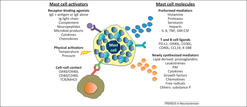 Diagnosing Mast Cell Activation Syndrome (MCAS) – More Questions and Answers (Post 3 of 4 in series)